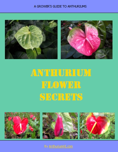 Anthurium Flower Secrets